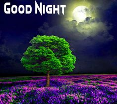 Good Night Images with flowers and nature - PIX Trends Night Moon Images, Sweet Good Night Images, Sweet Dreams Images, Good Night To You, Photos Of Good Night, Romantic Good Night, Good Night Sweet Dreams, Good Night Moon, Happy Akshaya Tritiya Images