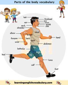 Human body parts - internal organs vocabulary PDF Human Body Name, Human Body Organs, Human Body Parts, Vocabulary Pdf, Vocabulary Activities, English Vocabulary Words, Learn To English, English Study, Human Body Structure