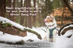 Repin this pin or ANY of Kurgo's pins to enter to win a winter swag pack with $100 of dog gear!