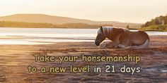 21 Days to a Quiet Mind – Horse Meditations   Happiness and Wellbeing for horse and rider