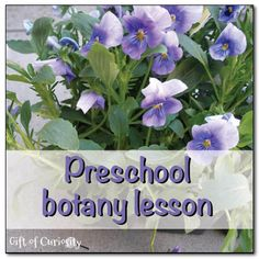 Preschool botany lesson || Gift of Curiosity