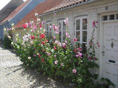 *THE GREEN GARDEN GATE*: Garden Plants_Hollyhocks * I've tried this look in the front of my house, but it was nearly as beautiful as this! Balcony Garden, Garden Gates, Garden Plants, Garden Cottage, Home And Garden, Landscaping Plants, Farmhouse Landscaping, Fruit Flowers, Hollyhock
