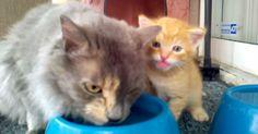 Seriously!!! Watch This… MEOW! Mama Cat Teaches Kitten How To Drink | The Animal Rescue Site Blog