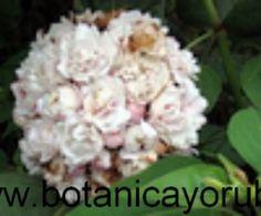 21 HIERBAS FRESCAS PARA BAÑOS,LIMPIEZA, DESPOJO (LEER EN DESCRIPCION)10 % OFF and Free Shipping, with more than $ 50 .00 www.botanicayoruba7.com