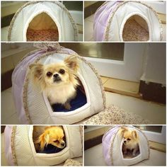 DIY Cozy Dog Tent-original link at the bottom of page. It is in Chinese however, it says that he used a sweater to line the interior, used wrapped thin wire to hold up the arches and double batting in between cotton fabric for the front and rear walls.