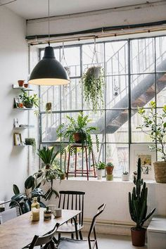 Modern and plant-filled dining area with a black pendant light, black chairs and a long table. We love the glass front and the urban jungle feeling.