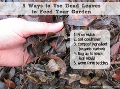 LEAVES are a free resource you can use to build a healthier organic garden. How? By recycling the nutrients. These are 5  ways you can turn leaf litter into 'soil food' for your plants. More free tips @ http://themicrogardener.com/diy-fertilisers-how-to-use-banana-peels/ | The Micro Gardener