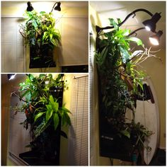 How I keep my panther chameleon Pascal. I call it the cageless cage. It is a living wall type of design with various vines and branches for the big man to climb on. It has two lights. One full spectrum heat lamp with UVA and UVB and another 200watt cfl bulb for the plants. I feed by hand or use a cricket keeper. Water is available nearly 24/7 by a dripper and the misting system comes on a few times a day. The nozzles are mounted to the lights. Enjoy, pascal does :)
