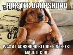 : Hipster Dachshund was a dachshund before Pinterest made it cool. #hipster #dachshund #meme
