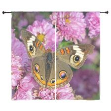 Common Buckeye Butterfly Curtains