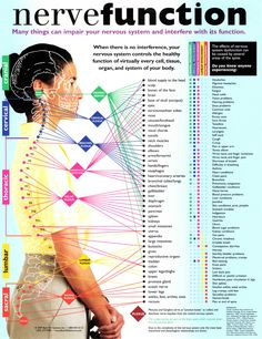 nerve function chart | Bloomington, IL | Bloomington-Normal Spine Clinic | 309-661-2725