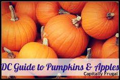 Pumpkin can be eaten many ways. Here are three simple recipes to add a little pumpkin to your meals. Pumpkin Pudding, Pumpkin Soup, Pumpkin Bread, Pumpkin Spice, Pumpkin Carving, Carving Pumpkins, Pumpkin Waffles, Cooking Pumpkin, Pumpkin Puree Recipes