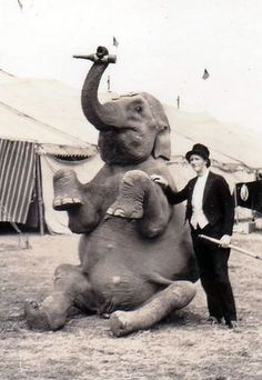 man and elephant.  please stop the abuse of circus animals by boycotting current circuses that use animals in their acts