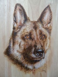 A German Shepherd dog. Burnt in wood and then highlighted with colour pencils. Manon Massari. https://www.facebook.com/OfMiArt