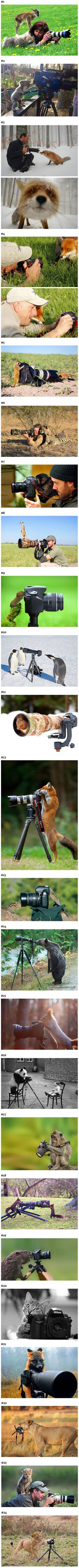 We have rounded up some animals who might have been camera operators in past lives.