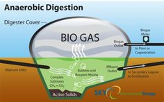 Anaerobic digestion uses micro-organisms to break down organic materials – such as farm manure – in an air-tight, oxygen-free tank (called a digester). The hungry micro-organisms munch on the organic matter, and as they digest it, they produce methane and Biomass Energy, Renewable Energy, Solar Energy, Solar Power, Wind Power, Biogas Generator, Alternative Energie, Anaerobic Digestion, Compost
