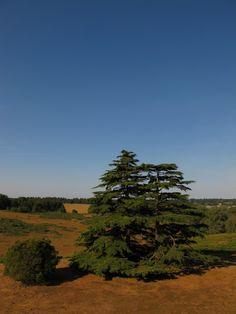 Landscape of Sutton Hoo