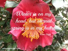 Winter is on my head, but eternal spring is in my heart ~ Victor Hugo