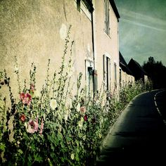 | ♕ |  Hollyhock road - contryside of Angers, Spain | by © Louise LeGresley
