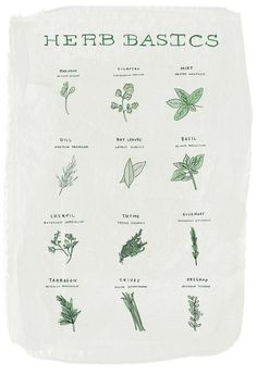 Herbs by illustrated by Alessandra Olanow