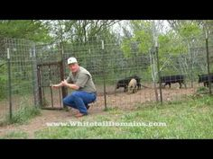 Home-Made HOG PEN for wild pigs