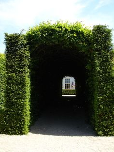 box wood tunnel entrance