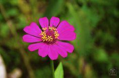 Natureza, flor, mosca
