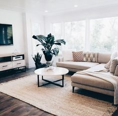 White ჻ minimal ჻ minimalist ჻ minimalistic ჻ simple ჻ home ჻ living room ჻ plant ჻ sofa ჻ decor ჻ furniture