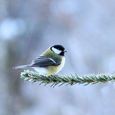 Pin Von Nini Three Auf Spring In My Heart Vogel Fotos Tierbabys Vogel