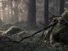 A bit scary old forest in fogg. Magical Forest, Helsinki, Petra, Finland, Scary, Deviantart, Jewels, Landscape, Forests