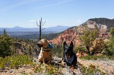 Pet friendly vacations to national parks can be disappointing for the pets. We found a couple of short trails where the dogs were welcome at Bryce and Zion, but the real dog friendly trails - not to mention spectacular scenery - is in nearby Dixie National Forest! Find more pet friendly places to stay and things to do near Dixie National Forest here: http://www.gopetfriendly.com/browse/united-states/utah/st-george