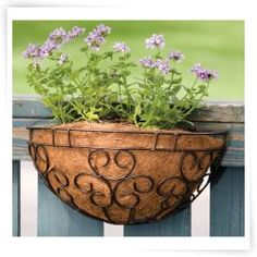 Panacea Cameo Series Wall Planter - 16 in.