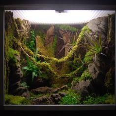 Terrarium tropical deluxe Ningua