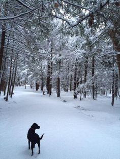 Out for a walk this morning in Baxter Woods via Maine Home+Design Magazine managing editor, Sarah Stebbins