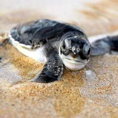 Adopt a sea turtle hatchling and win an original Ian Somerhalder autograph. :-)