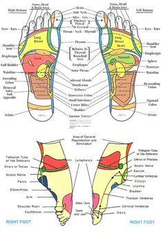 reflexology+chart | Head to Feet :: Reflexology foot chart