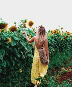 Sunflower field strollin'