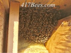 Apartment Complexes, Save The Bees, Beekeeping, Honey, Future, Future Tense, Accounting
