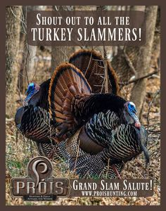 Grand Slam Salute! Who all has done it?! Let's hear it! Photo Credit: Prois Staffer, Gretchen Steele www.proishunting.com