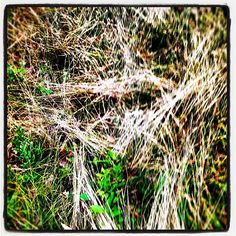 a face in the grasses #spooky #creepy #scream