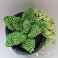 Flora The Succulent Crochet Pattern by Amour Fou image 3 Crochet Feather, Crochet Cactus, Half Double Crochet, Single Crochet, Crochet Stitches, Crochet Patterns, Crochet Ideas, Small Blankets, Kids Blankets