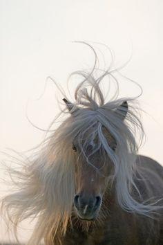 "Horses:  ""Arabella,"" by Christiane Slawik."