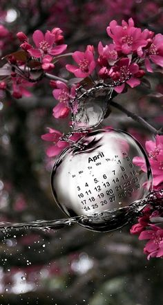 Crystal apple with calendar - Monate - Disney Characters Flower Background Wallpaper, Rose Wallpaper, Flower Backgrounds, Wallpaper Backgrounds, Splash Photography, Color Photography, Nature Photography, Hipster Graphic Tees, Cool Pictures For Wallpaper