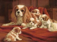 Cavalier King Charles Dog, King Charles Spaniel, Animals And Pets, Baby Animals, Puppy Pictures, Puppy Pics, Puppies And Kitties, Dog Art, Animal Drawings
