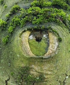The third eye of a tree
