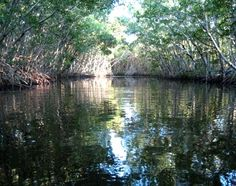 Collier-Seminole State Park in Naples, FL - Experience the natural beauty and wildlife of the Everglades, as well as a forest of tropical trees in this 7,271-acre state park. Find out more at www.FloridaFringeTourism.com