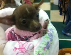 Such a precious little face! #puppies