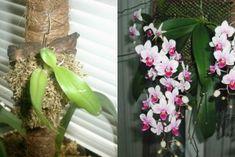 Žena hodila cesnak do vriaceho mlieka. Výsledkom bola záchrana pre celú rodinu! - chillin.sk Plants, Plant, Planets