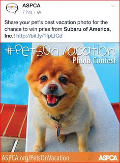 How do you inspire your supporters to act without sounding bossy or selfish? Here are five content marketing ideas that motivate more action (with examples). Save Animals, Cool Pets, Photo Contest, Content Marketing, Animal Rescue, Charity, Your Pet, Corgi, Vacation Photo