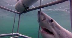 #TOP10 světových lokací pro plavání se žraloky... Nechybí jihoafrický záliv #FalseBay a nedaleké městečko #Gansbaai...  http://jentop10.cz/top10-nejlepsich-mist-na-svete-pro-plavani-se-zraloky/